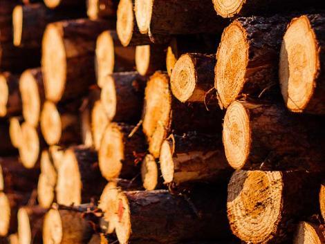 Ha nem válaszolunk az új kihívásokra, elveszítjük a magyar erdőket