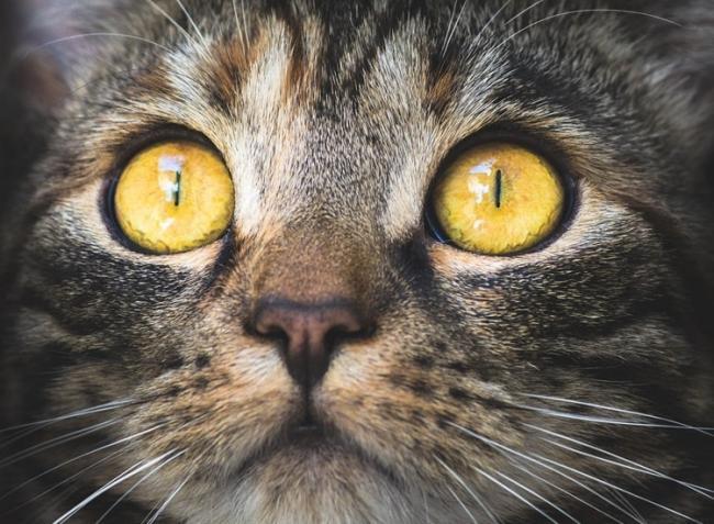 Hogyan kerülhet 5 macska egy kút mélyére?