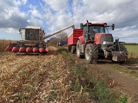 A kukorica betakarítását semmi sem zavarja meg