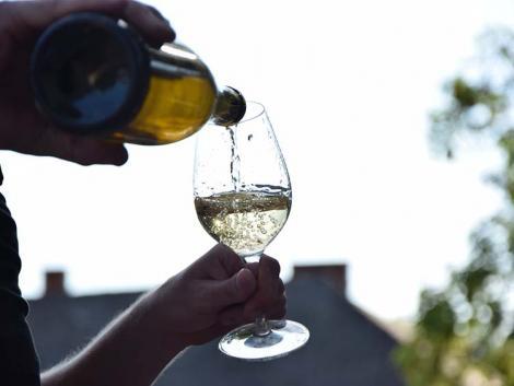 Szőlőből bor – ezek a legfontosabb lépések