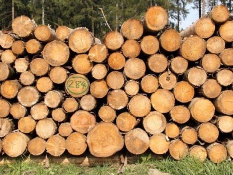 Jönnek az ellenőrzések – a faanyagok piacára csap le a hatóság