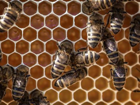 1 csepp magyar, 99 csepp kínai, és kész az EU-s méz