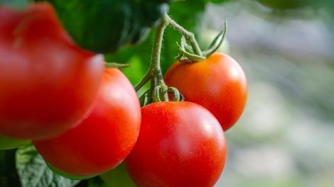 Ezt a zöldséget érdemes termeszteni