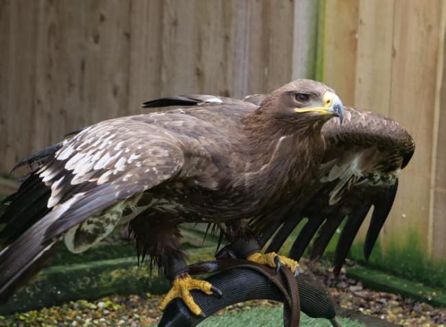 87 milliós kárt okoztak a védett madarakat gyilkoló orvvadászok
