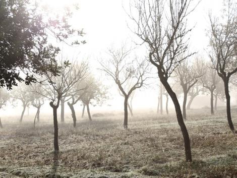 Ködös, fagyos reggelek – időjárás előrejelzés