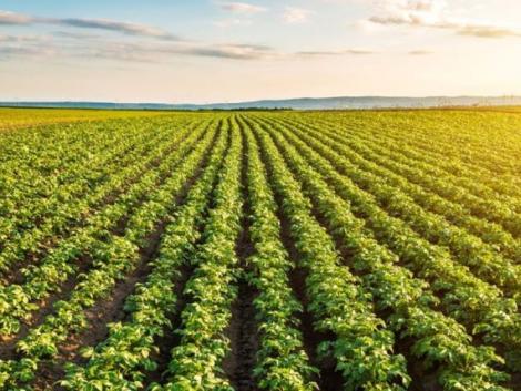 Nehéz helyzetbe kerülhetnek a kertészeti beruházások
