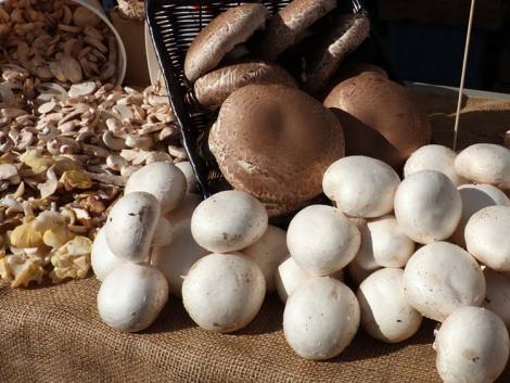 Tálcás gombák tesztje: megvan a legjobbak között a legfinomabb