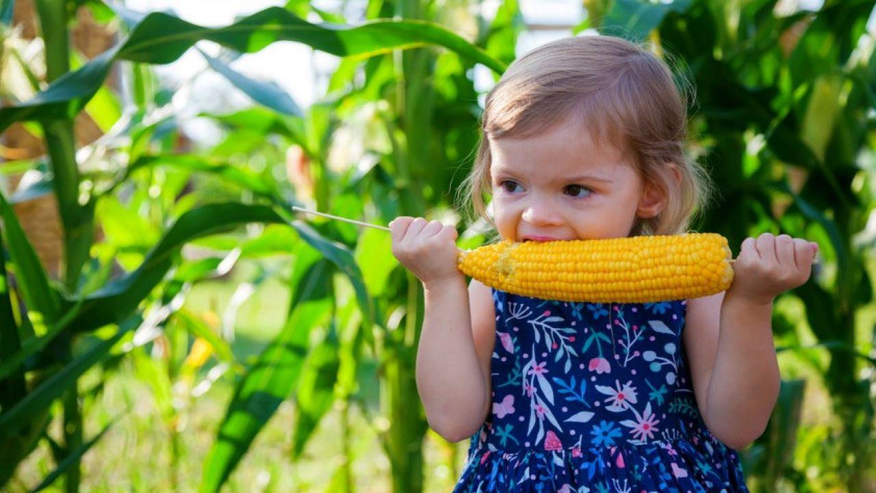 A főtt kukorica sokak kedvence. Fotó: 123rf.com