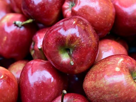 Nagy segítség az almásban a gyümölcsszedő robot