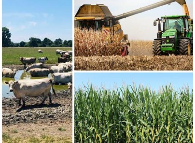 Kukoricavész, dráguló élelmiszerek, glifozátbotrány, meglepő terméseredmények