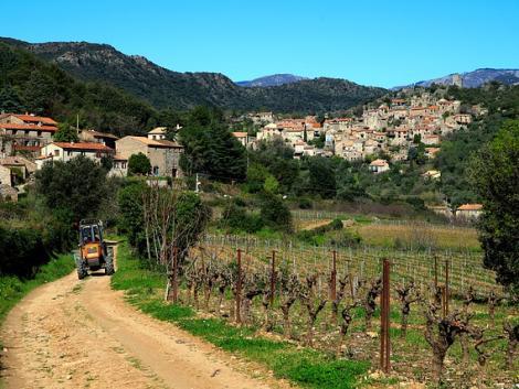 Évszádados hagyományt adnak fel a francia szőlőtermesztők