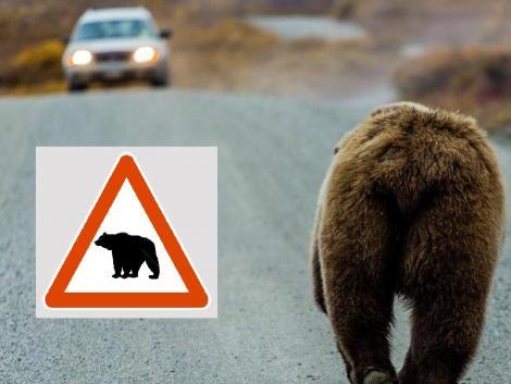 Két medvével találkozott egy lány Egerben