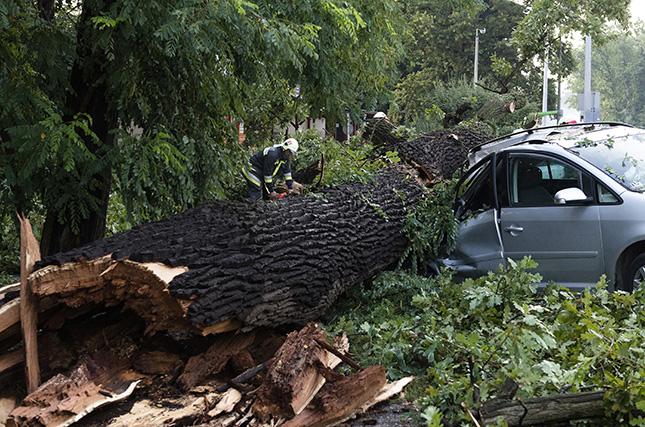 Autóra dőlt fa