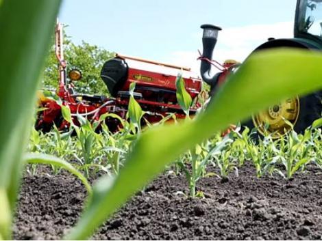 Ehhez a gyönyörű kukoricához egy Tempo vetőgép kellett