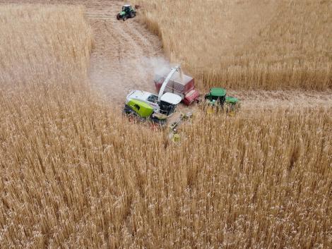 Nagyszerű hír! Hatalmas a kereslet a gabonára, az árak nem fognak csökkenni!