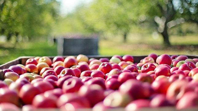 sok alma ládában