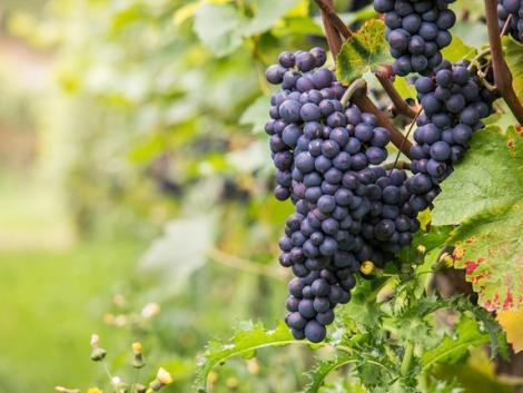 Augusztus 1-jén hatályba lépett az új bortörvény