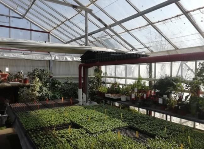 Kertészeti pályázatok: kettő már nyitva, most jön a harmadik!