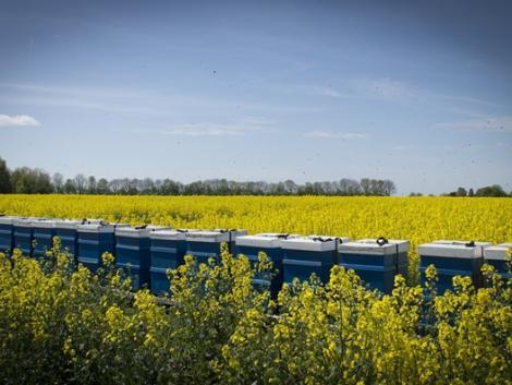 Riasztó hírek: alábecsülték a pusztítást, amit a növényvédő szerek okoznak a méhpopulációban