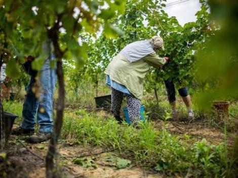 A gyümölcs- és zöldségtermesztés jelenleg legnagyobb tragédiája