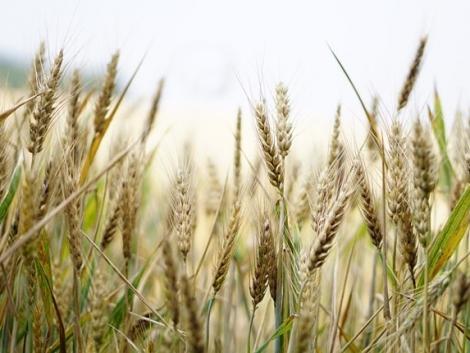 Megjelent az ökológiai gazdálkodást támogató pályázati felhívás