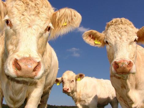 Napokon belül újra megnyílik egy népszerű pályázat az állattartók számára