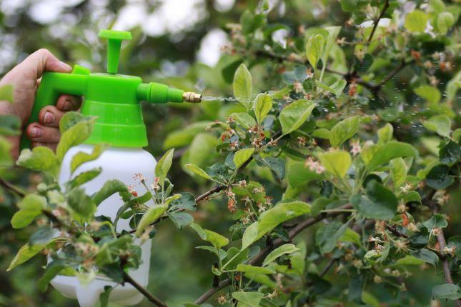 gyümölcsfa permetezése