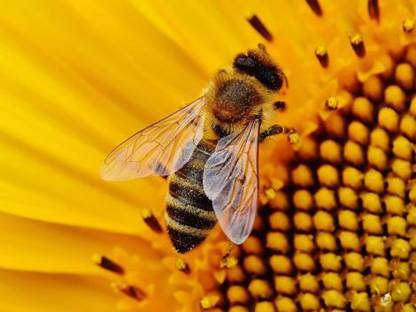 Méhek végveszélyben: akkor is irtjuk a méheket, amikor nem is gondolnánk