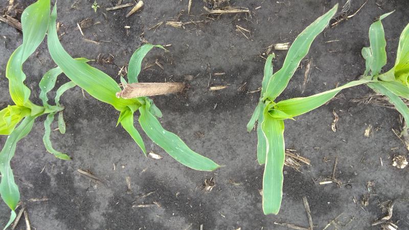 zöld ültetés kriofarm vélemények