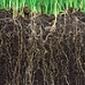 A jövő záloga a mezőgazdaságban